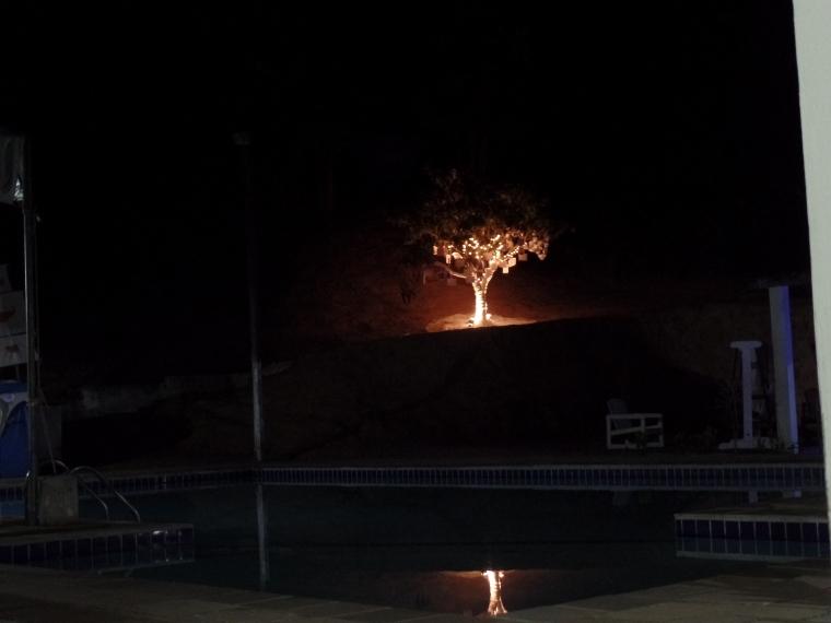 árvore da vida noite